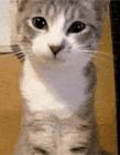 动物qq表情超萌 超可爱动物表情