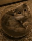 我只是虚胖猫咪 关于胖的搞笑图片
