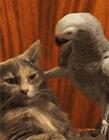 小鸟搞笑动态图片