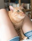美女与猫咪图片 猫咪喜欢在大腿上睡觉