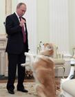 普京的秋田犬 日本送给普京的狗