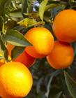 橘子高清�D片 橘子高清�D片大全大�D