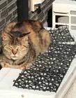 防猫的垫子 防猫刺垫被猫鄙视