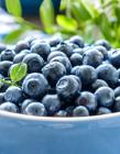 蓝莓水果图片 蓝莓水果图片大全