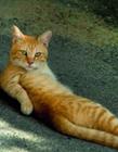 猫咪cosplay 猫cosplay史上最强