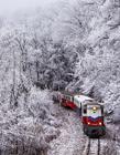 冬天的森林图片