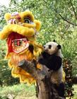 熊猫宝宝滚滚拜年