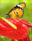 花与蝴蝶图片 花与蝴蝶图片大全