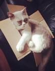 猫为什么喜欢钻盒子 猫喜欢箱子