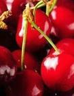 应季水果时间表图片 12个月水果时间表