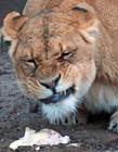 逗比搞笑动物表情 逗比搞笑各种动物图片