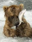 熊捕�~�D片大全 熊捕�~是什么行��