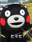 熊本熊聊天表情包下载