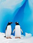 金江豚国际自然摄影公益大赛