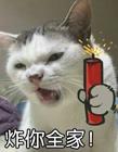 搞笑猫咪表情包 猫咪表情包带字图片