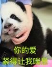 可爱熊猫表情包 真熊猫表情包