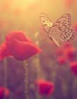 飞舞的蝴蝶图片