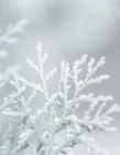 雪树图片大全 雪景摄影