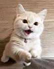 腿短的猫咪 猫咪卖萌gif