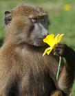 春天的动物图片
