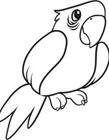 卡通鹦鹉简笔画图片