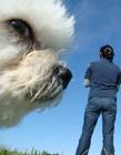 搞笑图片狗狗抢镜