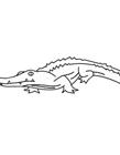 鳄鱼图片卡通简笔画