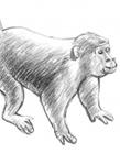 儿童画猴子简笔画步骤