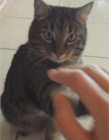 猫咪gif动态击掌