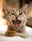 动物开心笑的图片