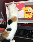 猫为什么喜欢趴键盘