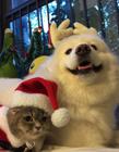 微博猫狗表情 猫狗合影