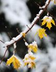 秋冬交替景色图片