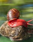 彩色蜗牛图片