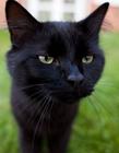 黑猫图片 高贵孤傲的黑猫图片
