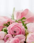 玫瑰花束图片 玫瑰花束图片实拍图