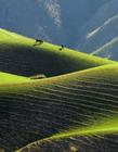 新疆特克斯草原风景图片