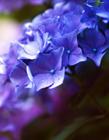 紫�_�m(lan)�D片