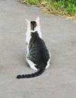 猫咪身上有趣的花纹