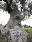 长相奇怪的树图片