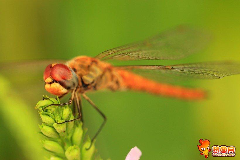 美丽蜻蜓图片大全