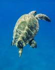 海龟照片 海龟的照片
