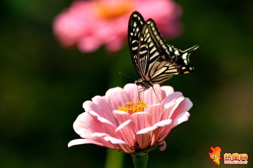 蝴蝶在花�仓�D��