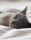 猫猫睡觉图片 猫猫睡觉的一组图片