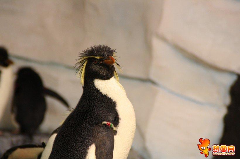 南极企鹅为什么不怕冷