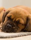 狗狗睡觉图片 睡觉狗狗唯美图片