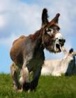 驴高清摄影图片 驴子也有唯美可爱的一面