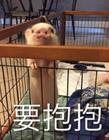 小香猪表情包配文字