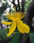 �S�色花的�D片大全 �S�色花的花有哪些