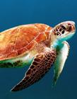 海龟多少钱一只 海龟的价格是多少